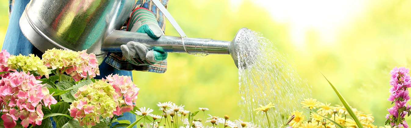 Friendly gardeners and top-quality gardening  services